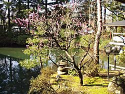 石川の温泉の庭園